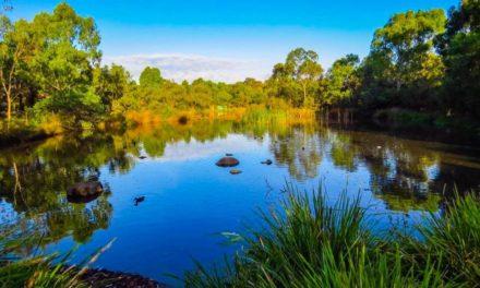 Mont Park – Springthorpe – Macleod                                                                 Flora & Fauna   Then and Now
